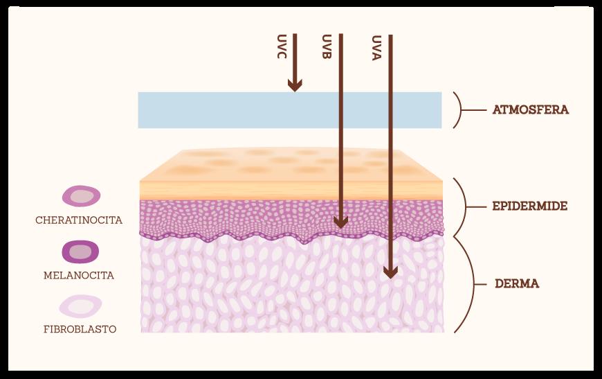 Lasaponaria raggi UV differenze tra solari fisici e chimici