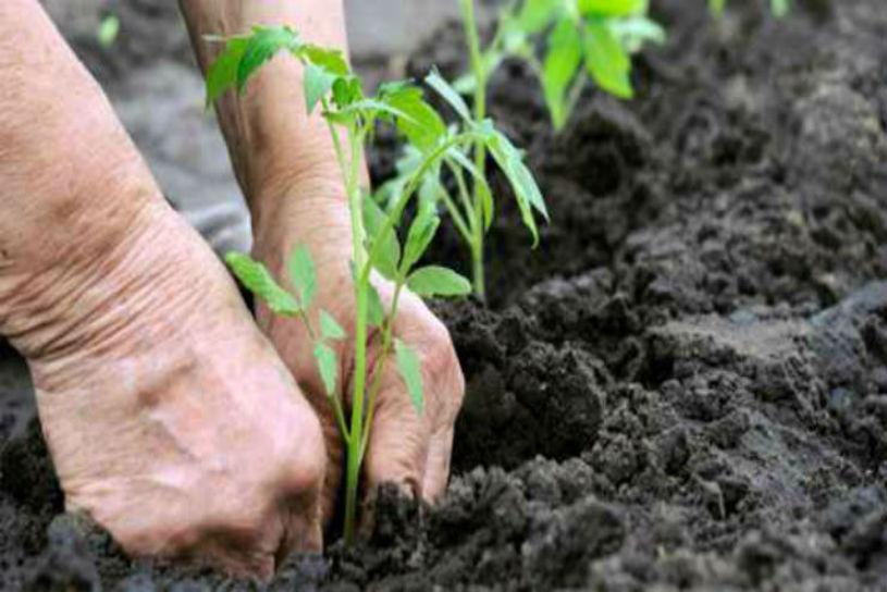 rimedi naturali piante